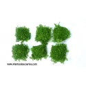 Hemianthus callitrichoides (6unid) 2,50€/unid