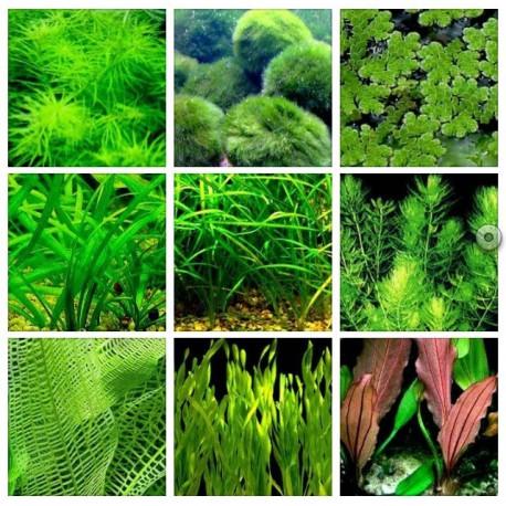 plantas de agua fr a