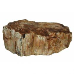 Roca madera fósil (kg)