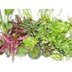 Lote de plantas 4