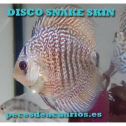 Pez disco Snake skin 6 cm